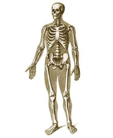 Лечение заболеваний суставов позвоночника конечностей суставы кисти руки человека